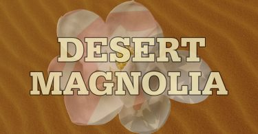 Desert Magnolia - Second Edition Now Available